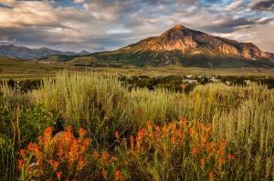 Crested Butte Wildflowers at Sunset, Matthew Wert