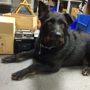 Erin's loyal dog Elliott guards the shipment before it goes out on the floor!