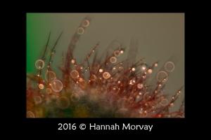 © 2016 Hannah Morvay