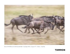 tamron-a022_plant_3